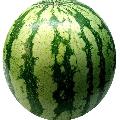 Watermelon23
